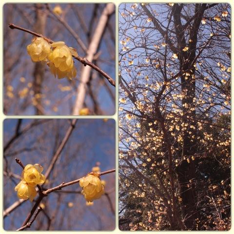 IMG_9072_Fotor_Collage.jpg